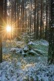 Midwinter sun Stock Photography