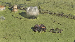 śmieci w jeziorze zbiory wideo