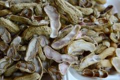 Śmieciarska sterta arachid skorupa Fotografia Royalty Free