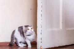 Miedo perdido del gato fotografía de archivo