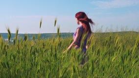 Miedzianowłosa dziewczyna w purpurowej sukni chodzi wzdłuż ścieżki wzdłuż pola zielona trawa i spikelets kiwa w wiatrze zbiory