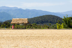 Miejsce dla suszyć kawową fasolę i pawilon Fotografia Royalty Free