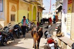 Miejscowy chodzi puszek ulica w Pushkar, India Zdjęcie Royalty Free
