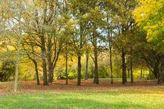 Miejscowy jesieni parkowy czas w obszarze zalesionym Obrazy Royalty Free