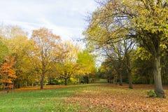 Miejscowy jesieni parkowy czas w obszarze zalesionym Fotografia Royalty Free