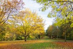 Miejscowy jesieni parkowy czas w obszarze zalesionym Obrazy Stock