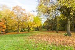 Miejscowy jesieni parkowy czas w obszarze zalesionym Fotografia Stock