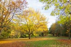 Miejscowy jesieni parkowy czas w obszarze zalesionym Zdjęcie Stock