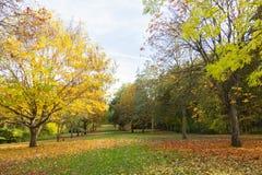 Miejscowy jesieni parkowy czas w obszarze zalesionym Zdjęcie Royalty Free