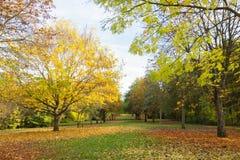 Miejscowy jesieni parkowy czas w obszarze zalesionym Obraz Stock