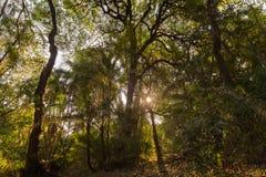 Miejscowy las przy Wiktoria spadkami fotografia royalty free