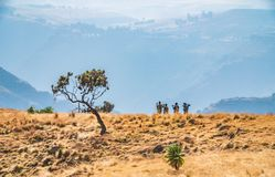 Miejscowy robi rozpoznanie chodzącego throug fantastycznego krajobraz w Simien górach fotografia stock