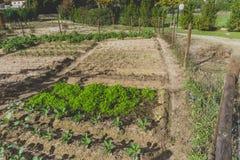 miejski na ogród Miasto urbanizujący jarzynowy ogród Rosnąć, farmi obraz stock