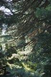 Miejski park Lahr, Czarny las/ Obrazy Royalty Free