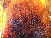 Miel Imagen de archivo libre de regalías