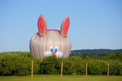 Miel, allí ` s un conejo en el jardín Fotos de archivo