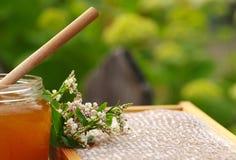 Miel con las flores y los panales Foto de archivo libre de regalías