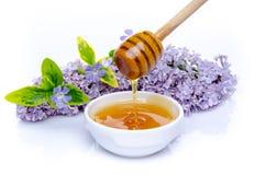 Miel con una flor de la lila y plantas verdes Imagenes de archivo