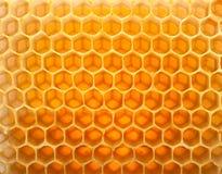 Miel dans le peigne Photo libre de droits