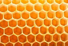 Miel dans le peigne photos stock