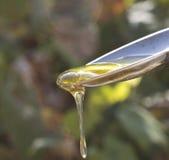 Miel dans une cuillère Photo stock