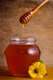 Miel de colada Imagen de archivo libre de regalías