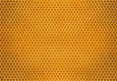 Miel de la abeja en fondo del modelo del panal Imagenes de archivo