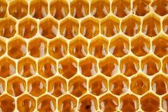 Miel de la abeja en macro del panal Foto de archivo