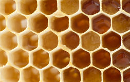 Miel de la cerveza en panales. Foto de archivo