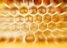 Miel de la cerveza en panales. Fotos de archivo