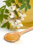 Miel del acacia Imagen de archivo