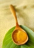 Miel del acacia Imagenes de archivo
