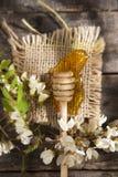Miel del acacia Fotografía de archivo