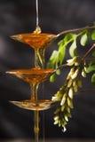 Miel del acacia Imagen de archivo libre de regalías