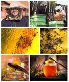 Miel del collage Imágenes de archivo libres de regalías
