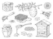 Miel dibujada mano Elementos del bosquejo del tarro del panal y de la miel de la abeja del vintage, flores del garabato y cera de stock de ilustración