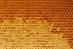 Miel en macro del primer del panal Fotografía de archivo libre de regalías