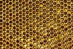 Miel en panal Fotografía de archivo