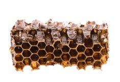 Miel en panal Imagenes de archivo