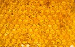 Miel en panal Imagen de archivo