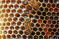 Miel en panales. Imagen de archivo libre de regalías