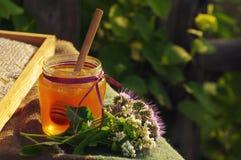 Miel en un tarro de cristal y panales de la abeja con las hierbas melíferas de las flores Fotos de archivo libres de regalías