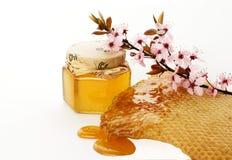 Miel et fleur Photos libres de droits