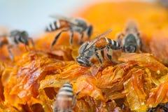 Miel frais dans le peigne photographie stock libre de droits