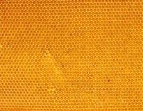 Miel frais dans le peigne image stock