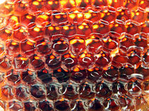 Miel frais dans le peigne. Photographie stock