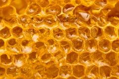 Miel frais dans le peigne Macro Photo stock