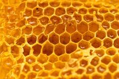 Miel frais dans le peigne Macro photos stock