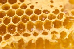 Miel frais dans le peigne Macro photos libres de droits