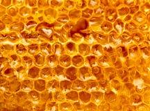 Miel frais dans le peigne Macro image stock
